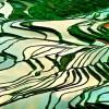 Du lịch Sapa ngắm vẻ đẹp ruộng bậc thang mùa nước đổ