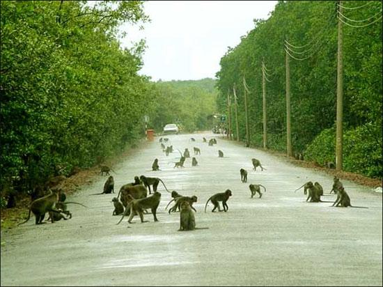 Tìm hiểu về đảo Khỉ ở Cát Bà