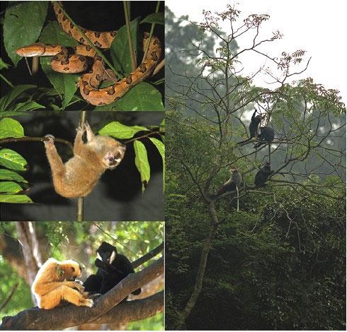Một số loài động vật quý hiếm tại vườn quốc gia Phong Nha- Kẻ Bàng