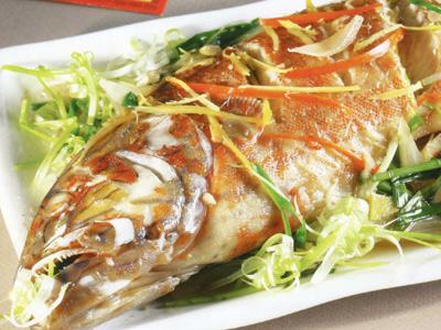 Cá song – đặc sản hấp dẫn Cát Bà