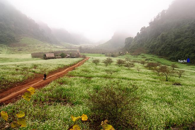 Hoa cải ướt đẫm sương ở Mộc Châu