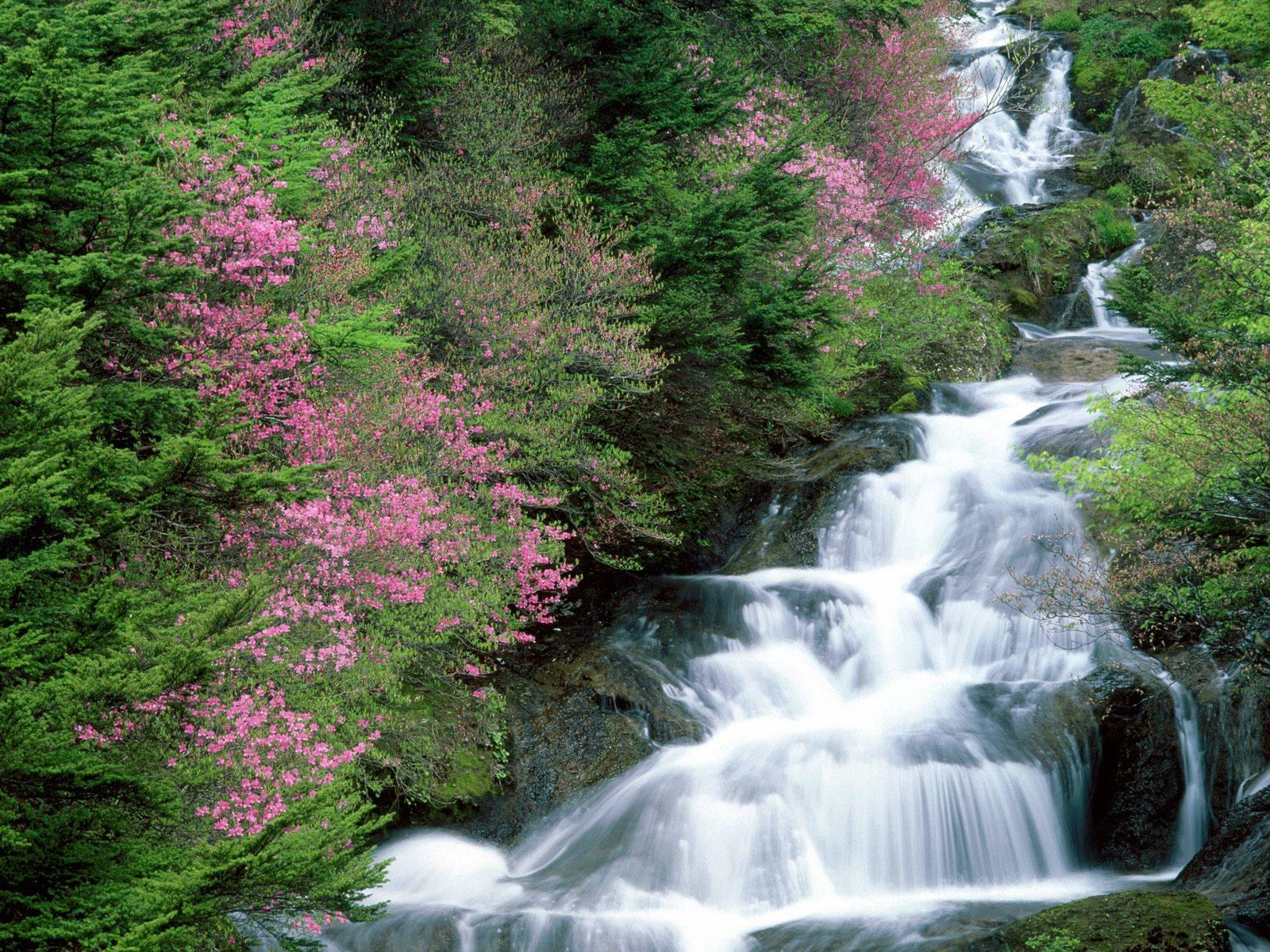 Suối Tranh Phú Quốc – một tuyệt tác của thiên nhiên
